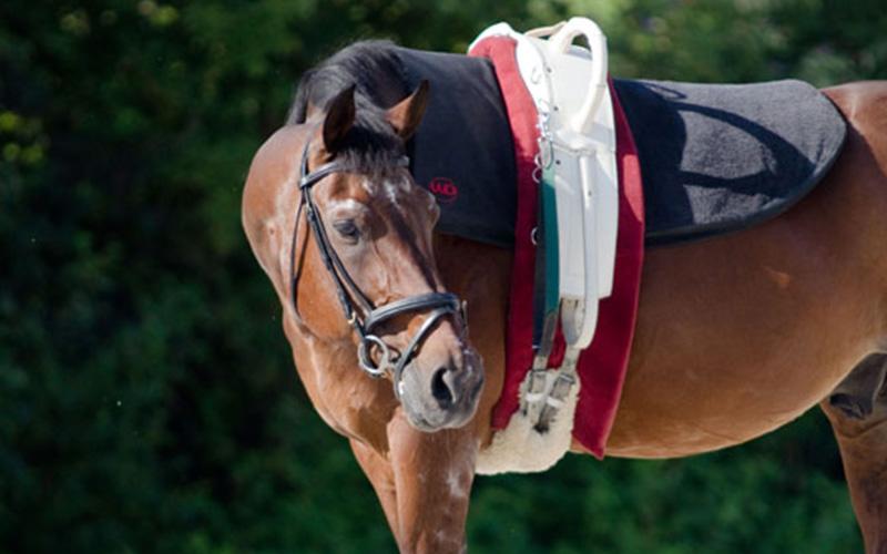 pferd3.jpg