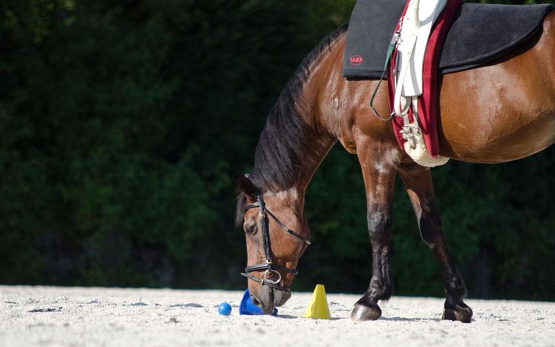 pferd5.jpg